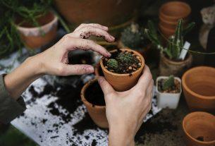 Co można kupić w hurtowni ogrodniczej online?