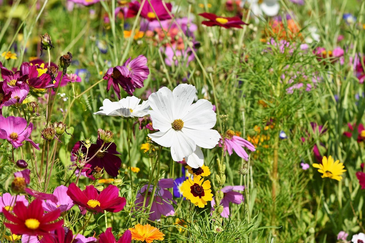 Hurtownia ogrodnicza online: dlaczego warto?